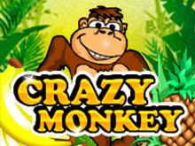 Crazy Monkey в 777 казино
